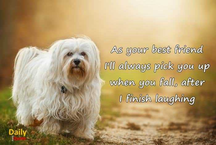 Best friend Funny Quotes when you fall I laughing