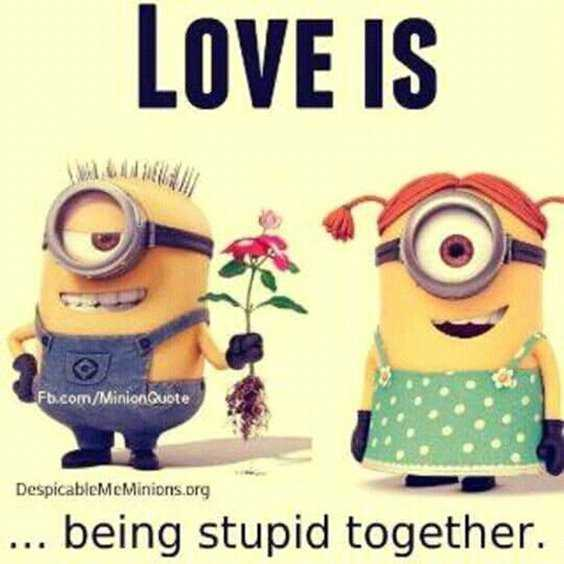 65 Best Funny Minion Quotes And hilarious pictures to laugh 15