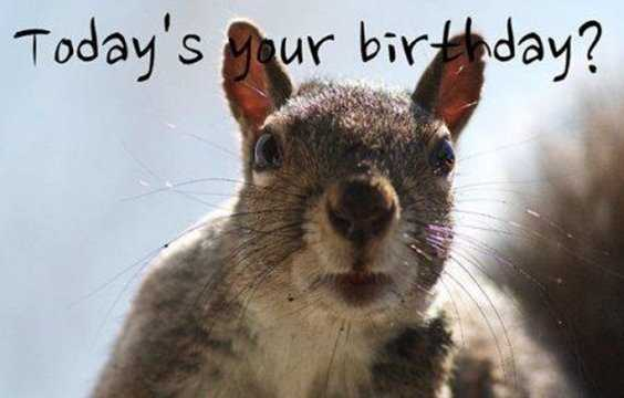 42 Happy Funny Birthday Images Funny Birthday Pictures 20