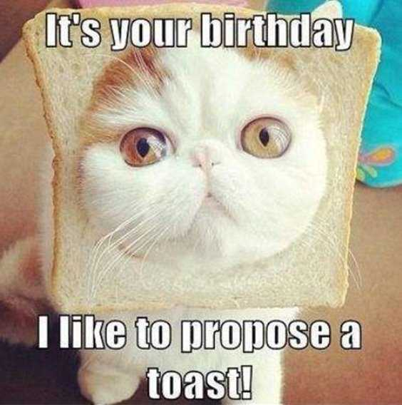 42 Happy Funny Birthday Images Funny Birthday Pictures 32