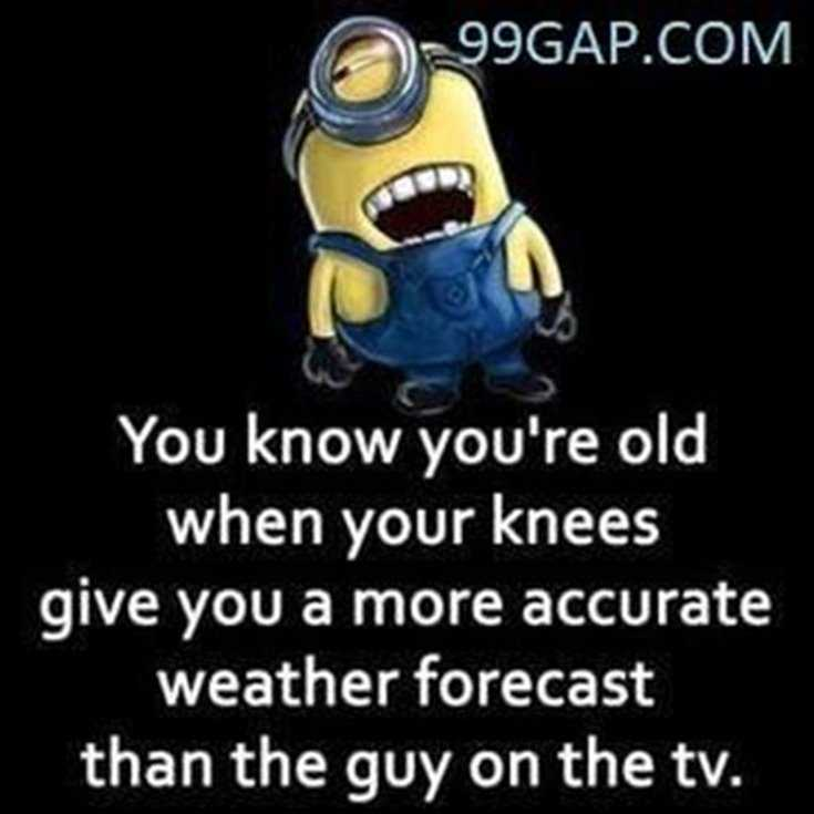 Minions Quotes Top 370 Funny Quotes With Pictures Sayings 44
