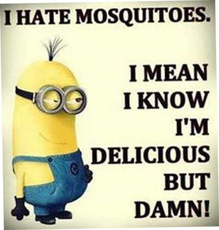 Minions Quotes Top 370 Funny Quotes With Pictures Sayings 75