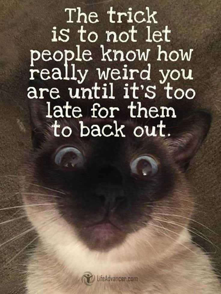 Top 40 Funny Witty Quotes 36