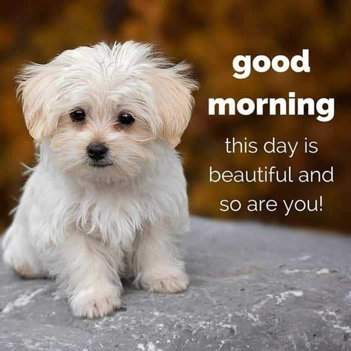 35 Good Morning Love Quotes For You to Life Sayings 26