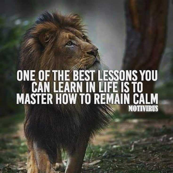 247 Motivational Inspirational Quotes 144