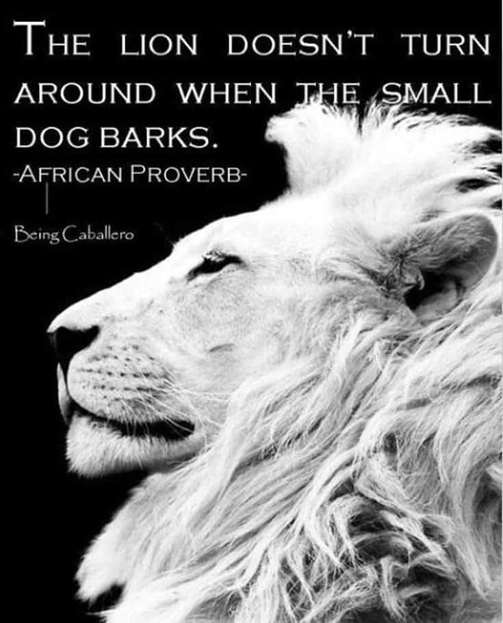 247 Motivational Inspirational Quotes 157