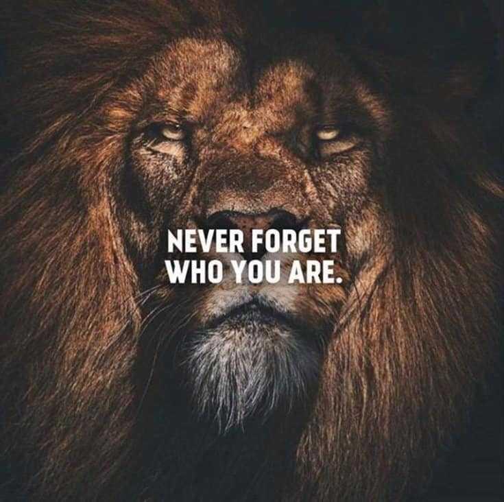 247 Motivational Inspirational Quotes 190