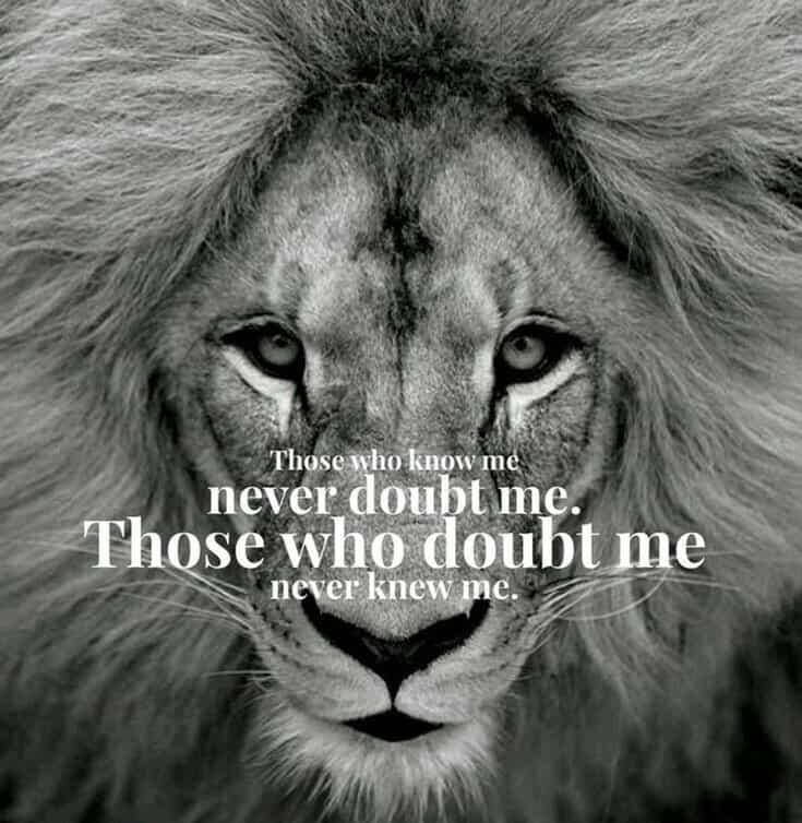 247 Motivational Inspirational Quotes 221