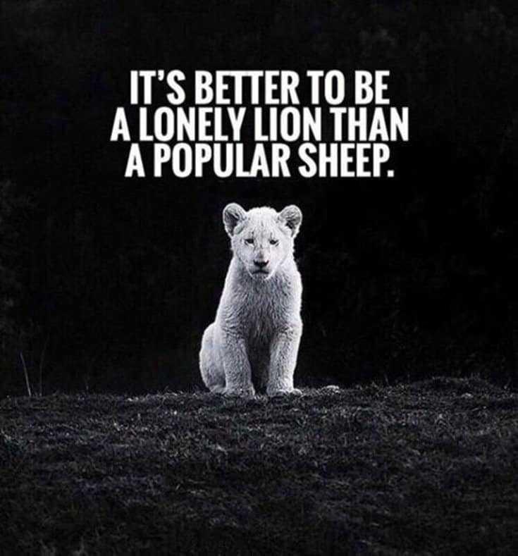 247 Motivational Inspirational Quotes 237
