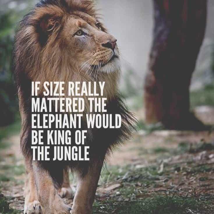 247 Motivational Inspirational Quotes 56