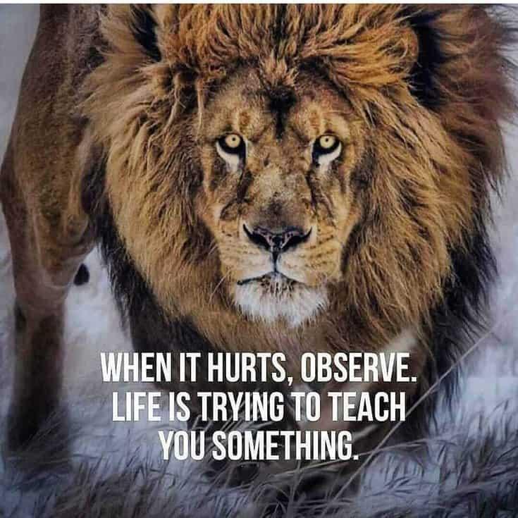 247 Motivational Inspirational Quotes 61