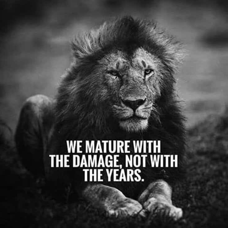 247 Motivational Inspirational Quotes 66