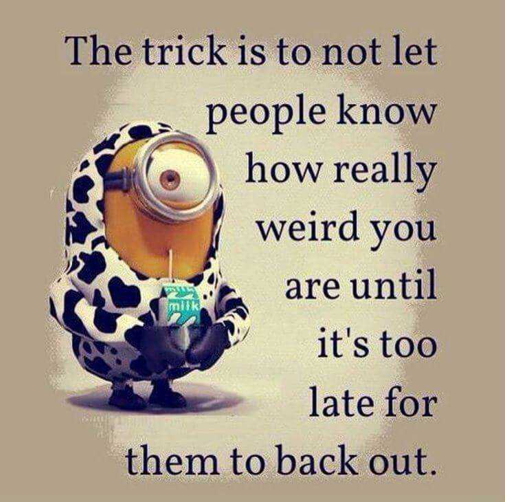 Top 37 Hilarious Minions Quotes – Life Quotes Humor 7