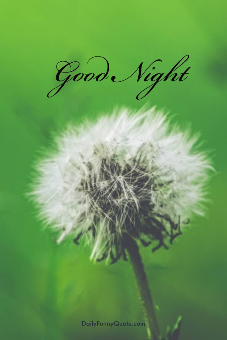 28 Amazing Good Night Quotes and Wishes with Beautiful Images 27