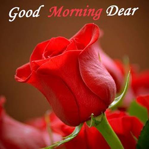 50 Romantic Good Morning Love Messages Morning Wishes 22