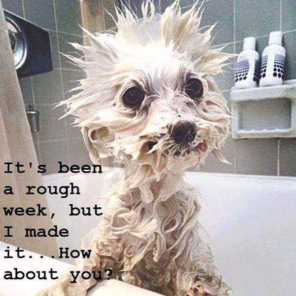 104 Funny Short Sayings To Brighten Up Your Day | quote of the week funny, odd funny quotes, funny but smart quotes