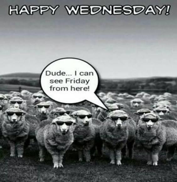 Cute Wednesday Meme