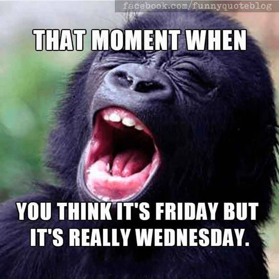 Wednesday Meme Animals