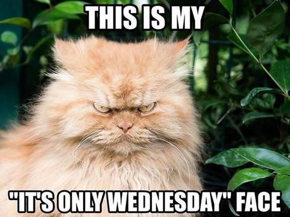funny cartoon wednesday memes