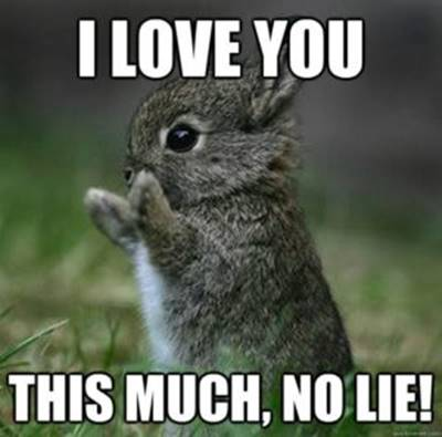 """40 Cute Funny Love Memes Images to Your Love Funny Love Cartoon Memes - """"I love you this much, no lie!"""""""