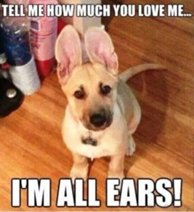 """40 Cute Funny Funniest Love Memes Dog - """"Tell me how much you love me… I'm all ears!"""""""