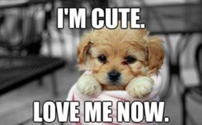 """40 Cute Funny Love Memes Images to Your Love Funniest Love Meme Dog - """"I'm cute. Love me now."""""""