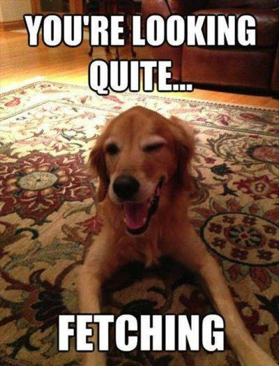 """40 Cute Funny Love Memes Images to Your Love Funny Memes Love - """"You're looking quite… Fetching."""""""