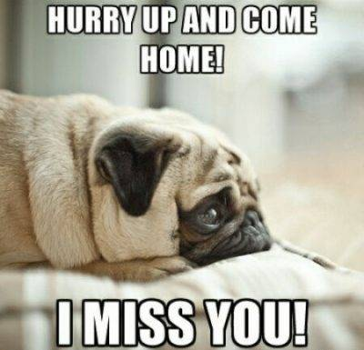"""40 Cute Funny Love Memes Images to Your Love Hilarious Love Memes - """"Hurry up and come home! I miss you!"""""""