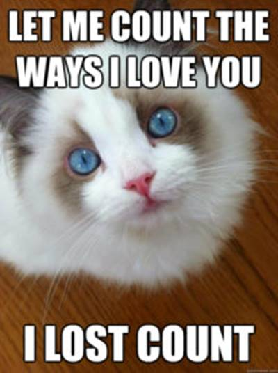 """40 Cute Funny Love Memes Images to Your Love Funny Love Meme Pics - """"Let me count the ways I love you I lost count."""""""