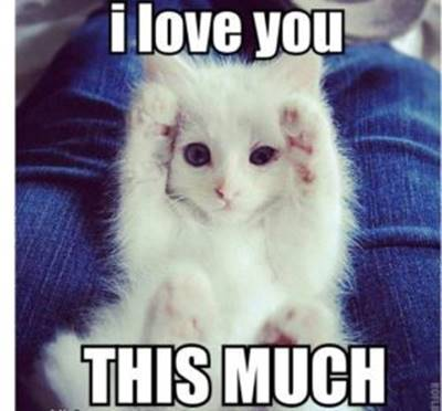 """40 Cute Funny Love Memes Images to Hilarious I Love You Memes - """"I love you this much."""""""