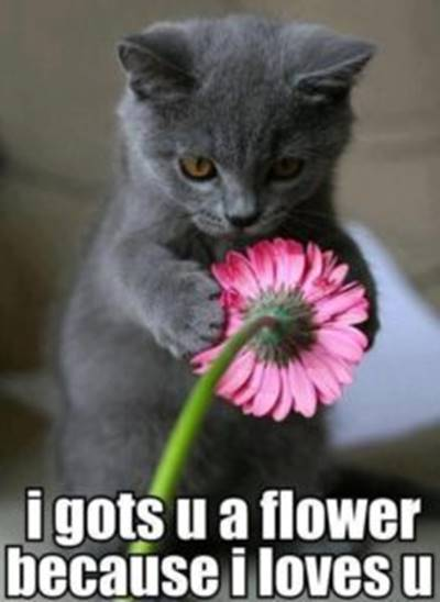 """40 Cute Funny Love Memes Images to Your Love Best Funny Love Memes for Girlfriend - """"I gots u a flower because I loves u."""""""