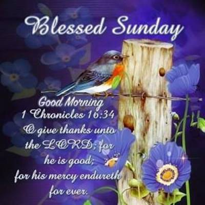 funny sunday quotes and sayings  - Blessed Sunday, Good morning The Lord for he is good for his mercy endureth forever.