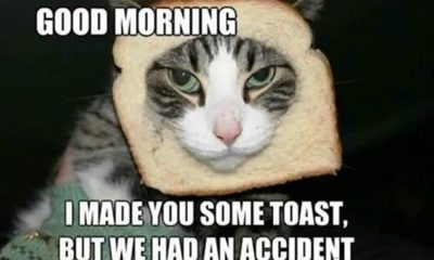 happy good morning memes quotes with images
