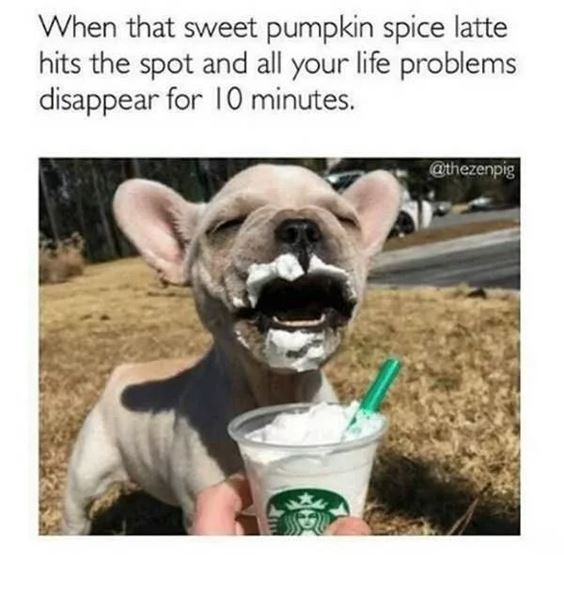 cute pumpkin spice latte Pumpkin Spice Memes Images And Funny Quotes