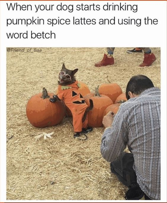 pumpkin spice latte funny Pumpkin Spice Memes Images And Funny Quotes